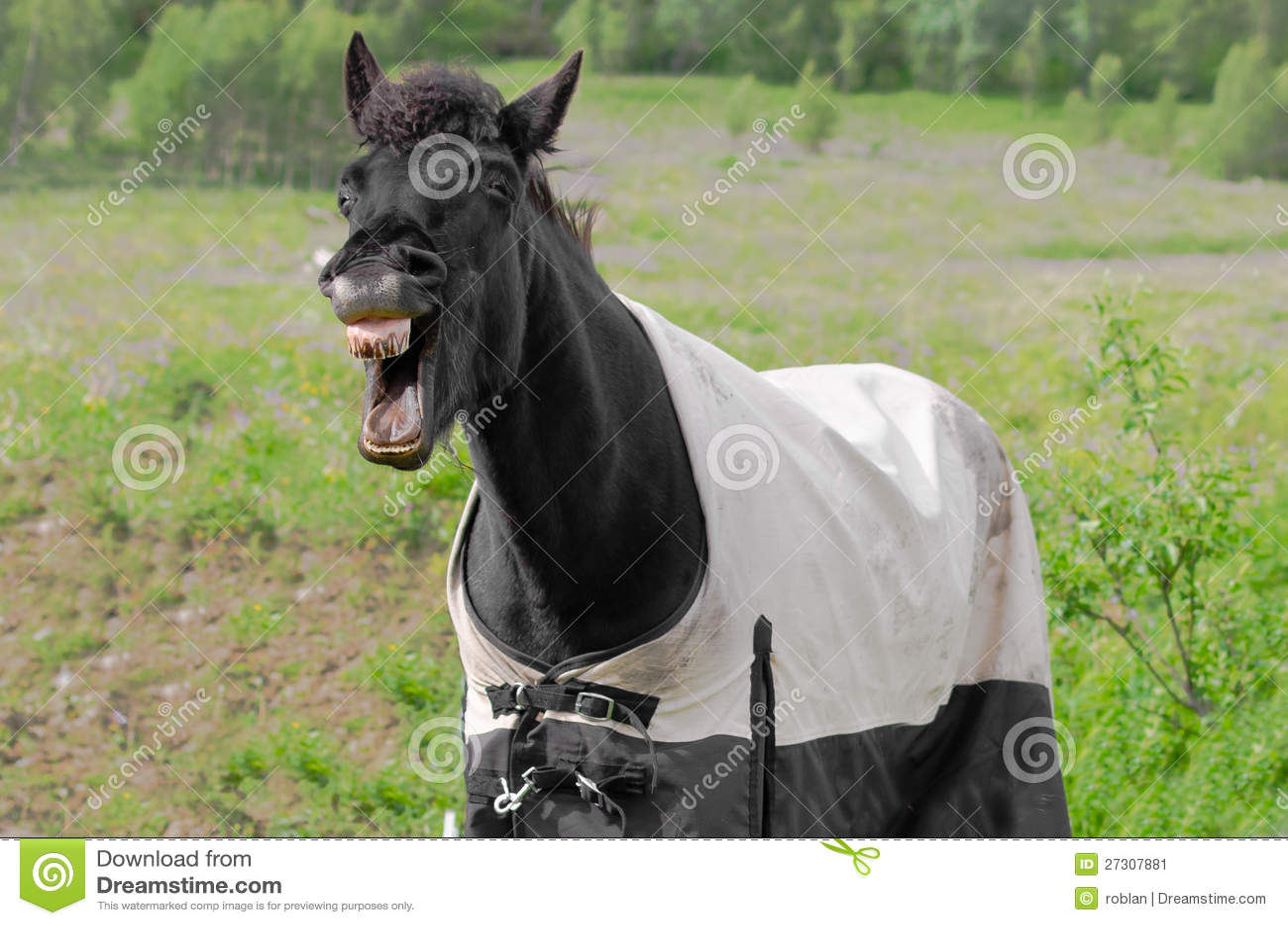 Laughing horse stock image. Image of happy, loud, coat ... - photo#37