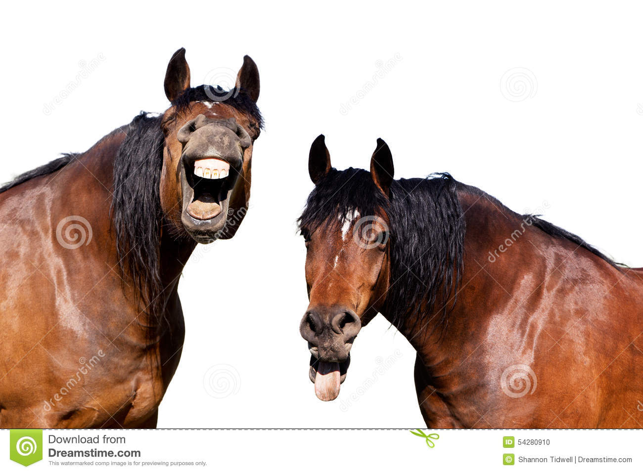 Download Laughing horses stock photo. Image of hysterical, humor - 54280910