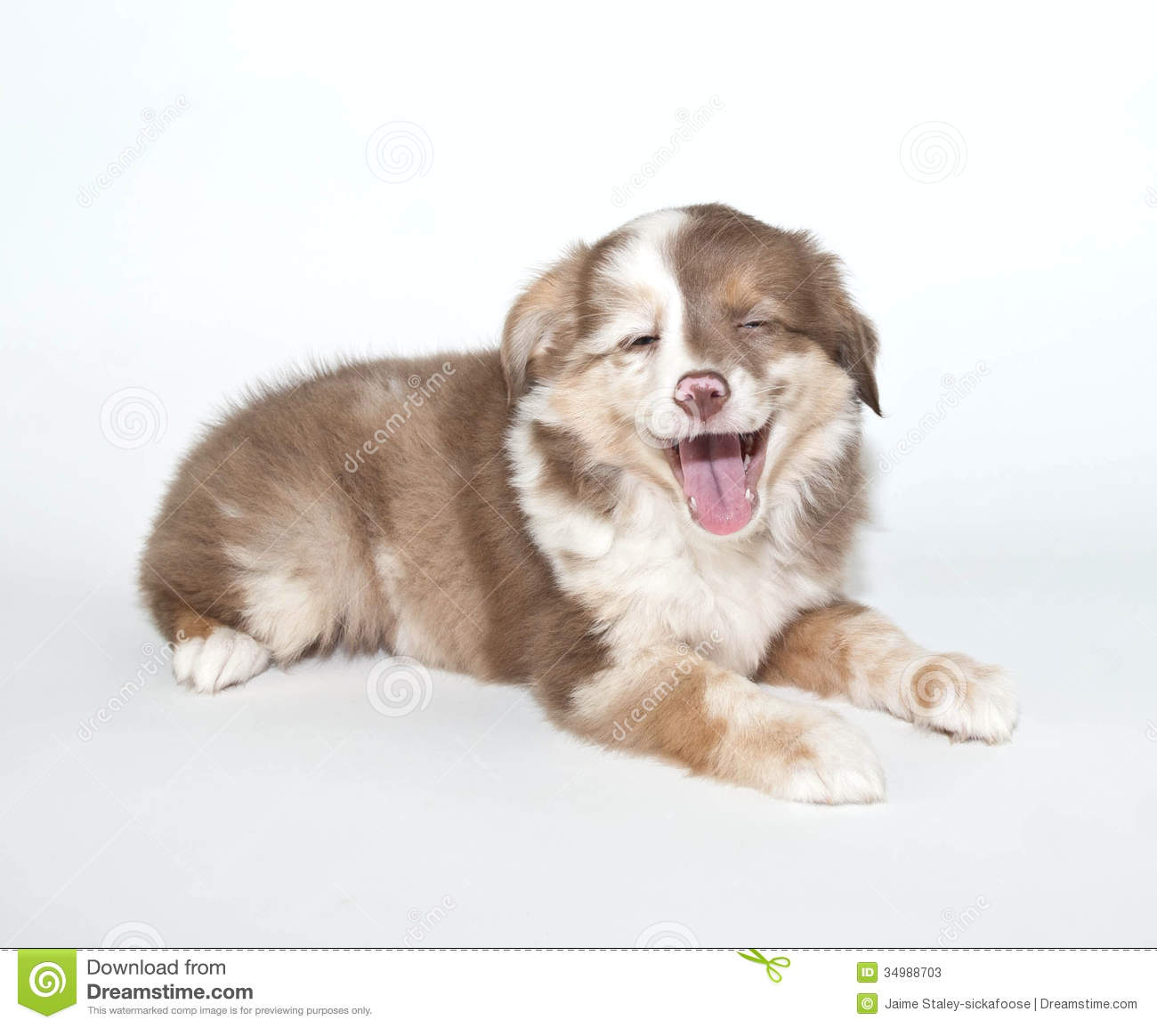Laughing Puppy stock image. Image of card, baby ...