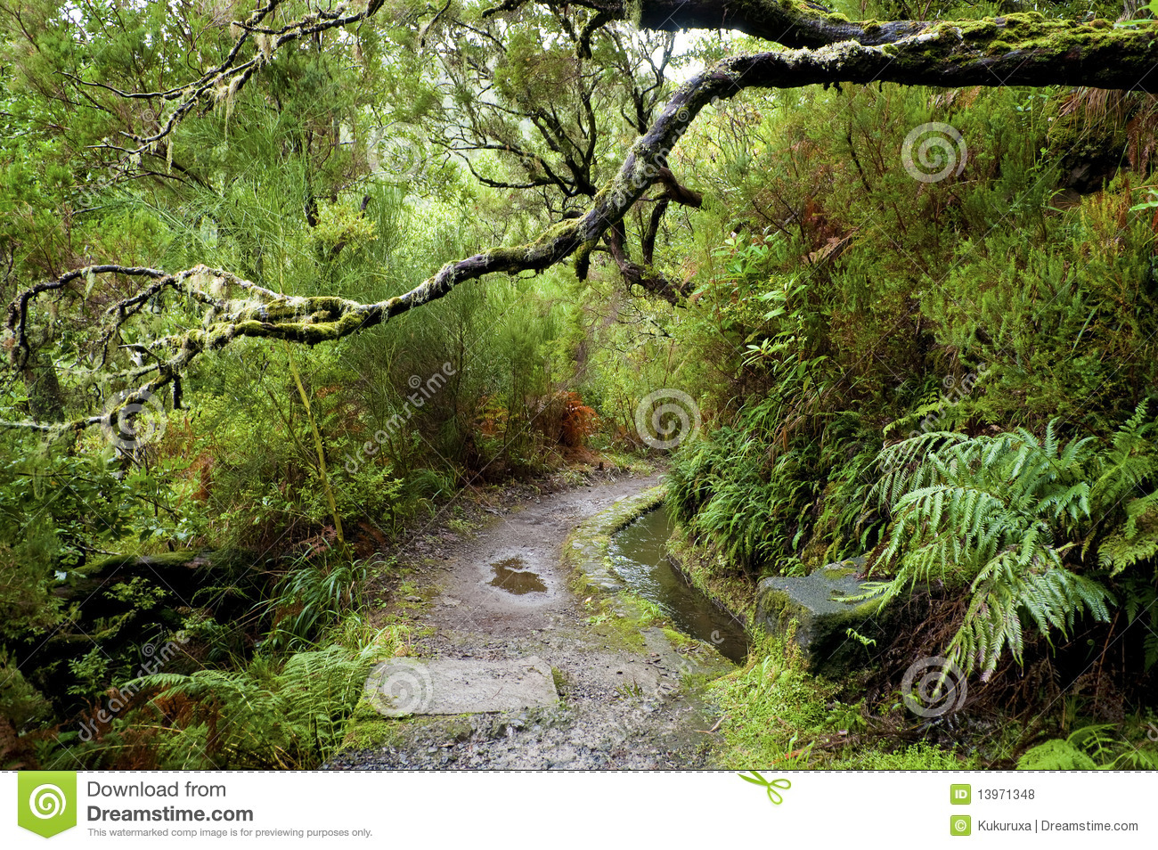 Laurel Forest On Madeira Stock Photo Image Of Climate