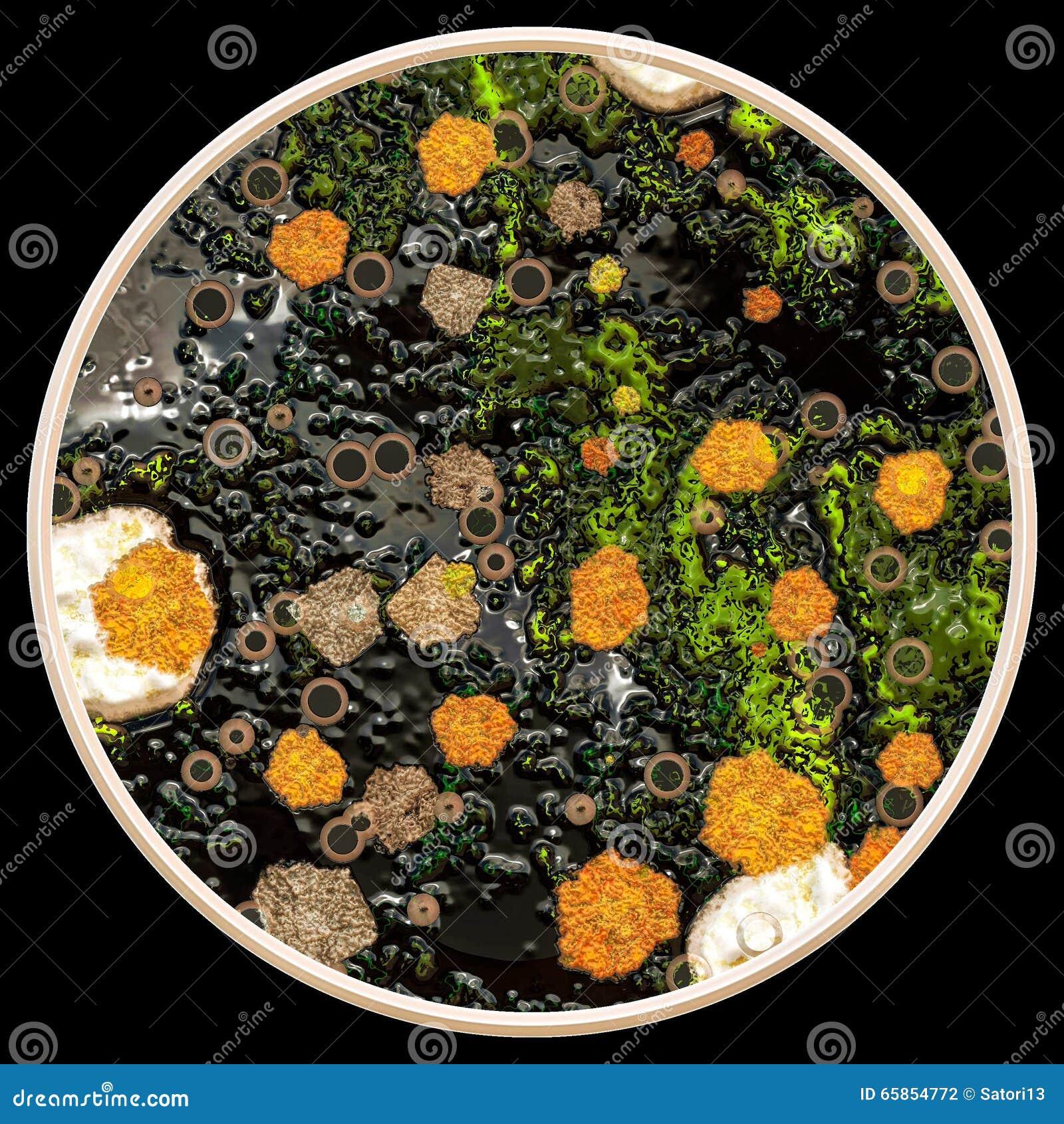 Lav och svampar på den petri maträtten