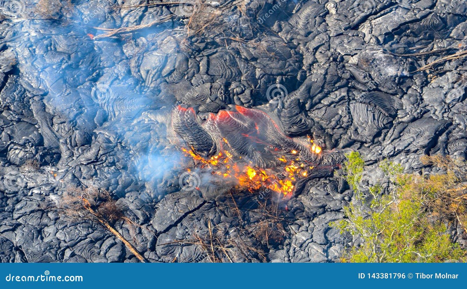 Lava derretida que flui para fora na ilha grande de destruição cinzenta Havaí das árvores do campo de lava