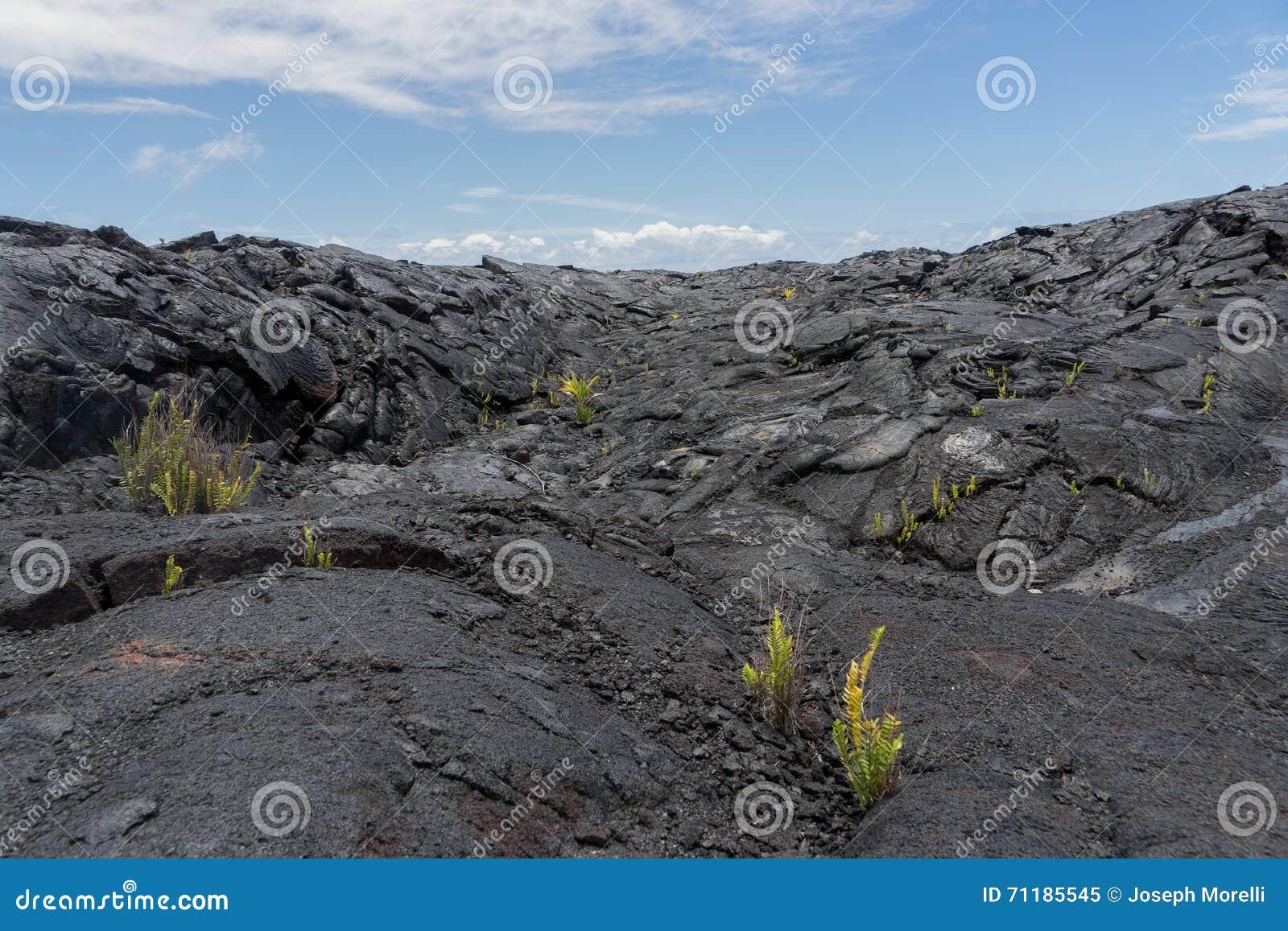 Lava Field sur la grande île d Hawaï