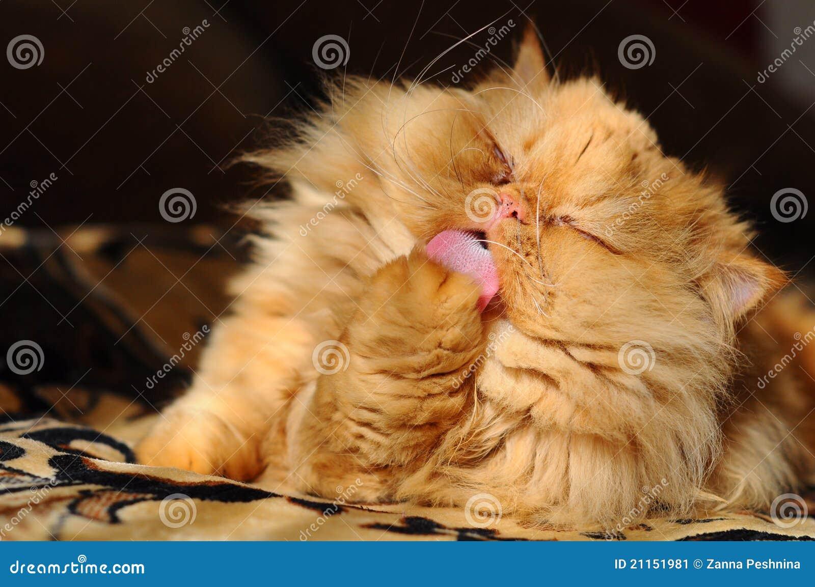 Lavagem do gato