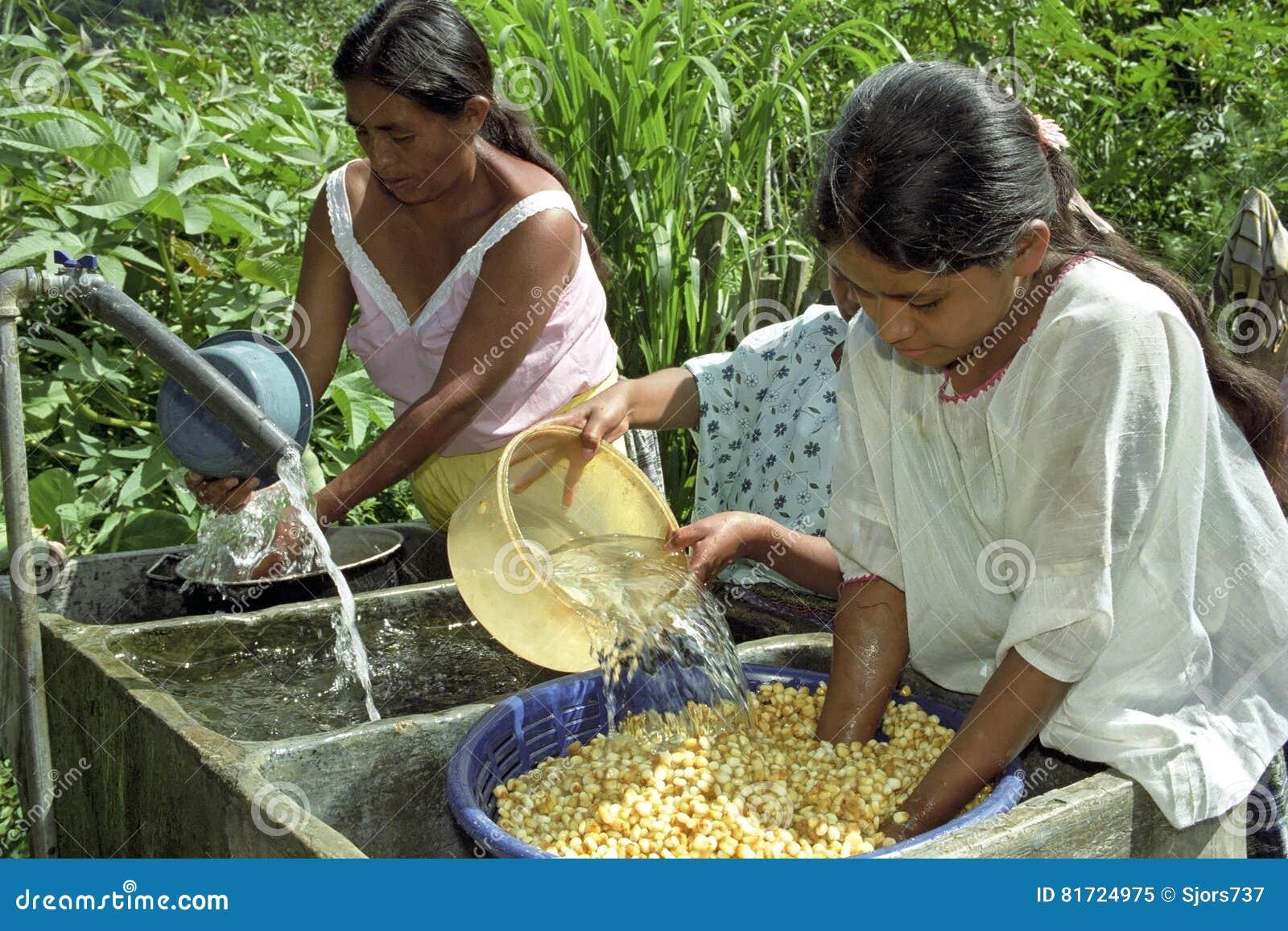 A lavagem dos Guatemalans e embebe o milho no dissipador