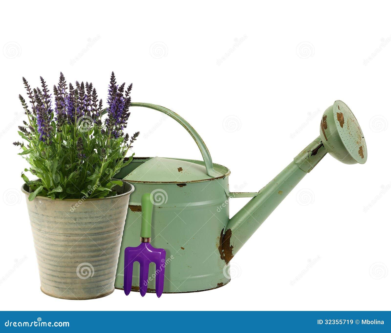 lavande dans un seau de fleur avec la bo te d 39 arrosage l 39 arri re plan images libres de droits. Black Bedroom Furniture Sets. Home Design Ideas
