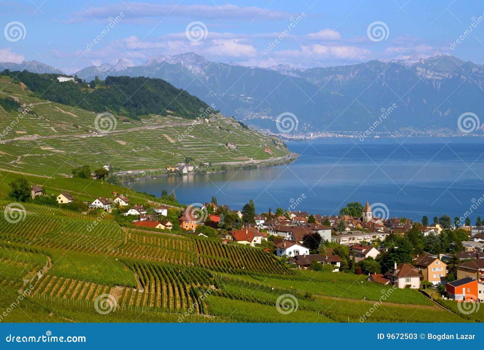 Lavaux Weinberge auf See Genf, die Schweiz