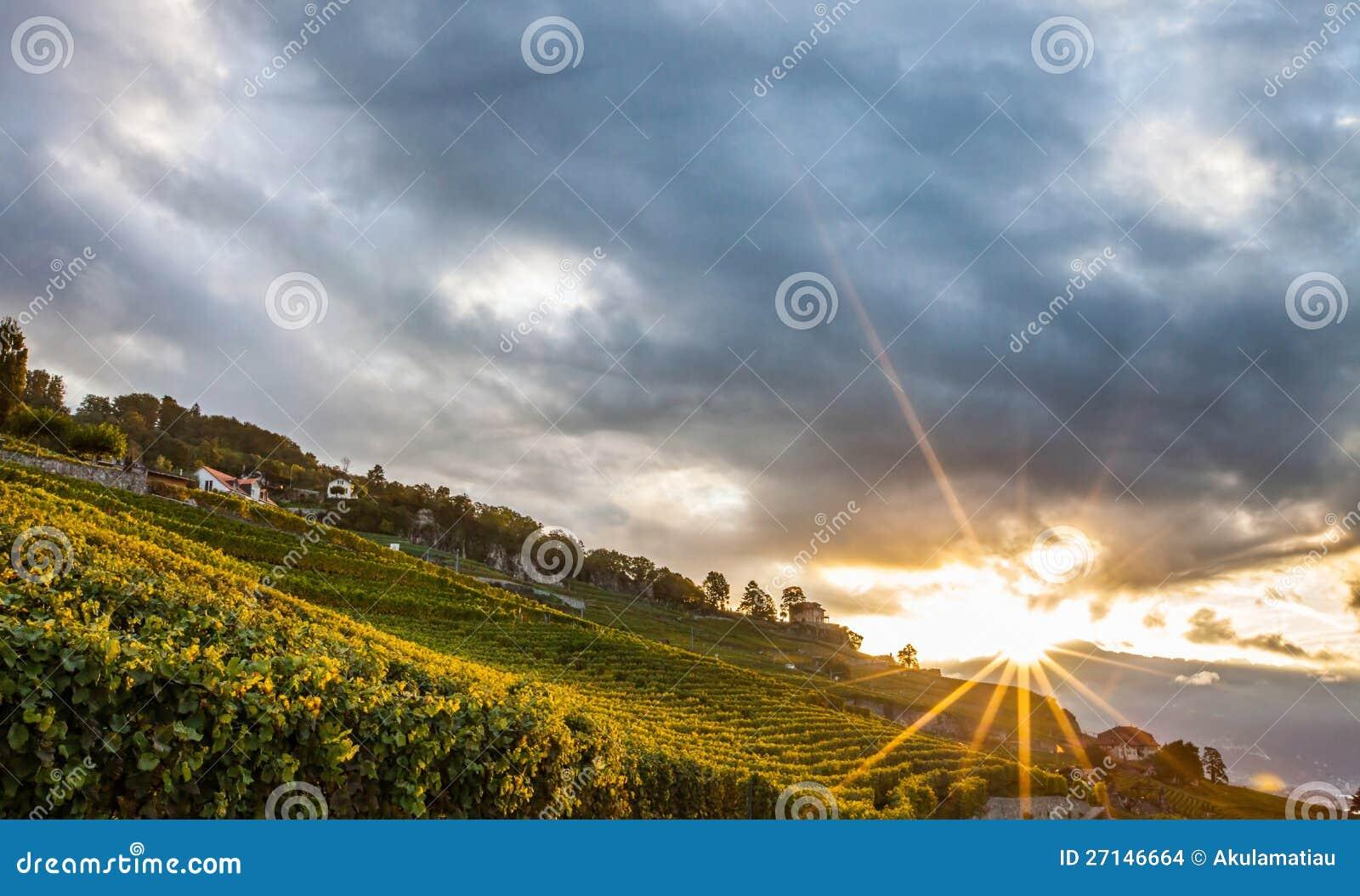 Lavaux zwitserland zonsopgang i van de terrassen van de wijngaard stock foto afbeelding - Afbeeldingen van terrassen verwachten ...