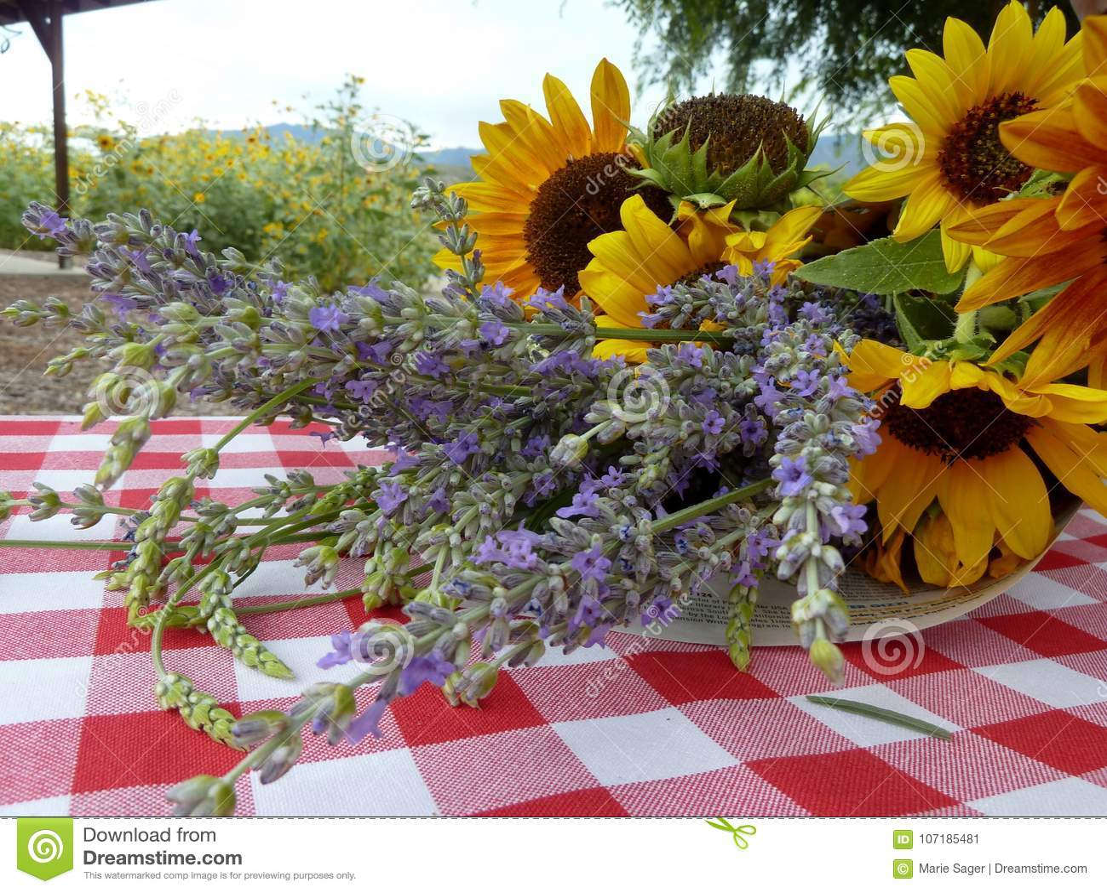 Lavendar и солнцецветы