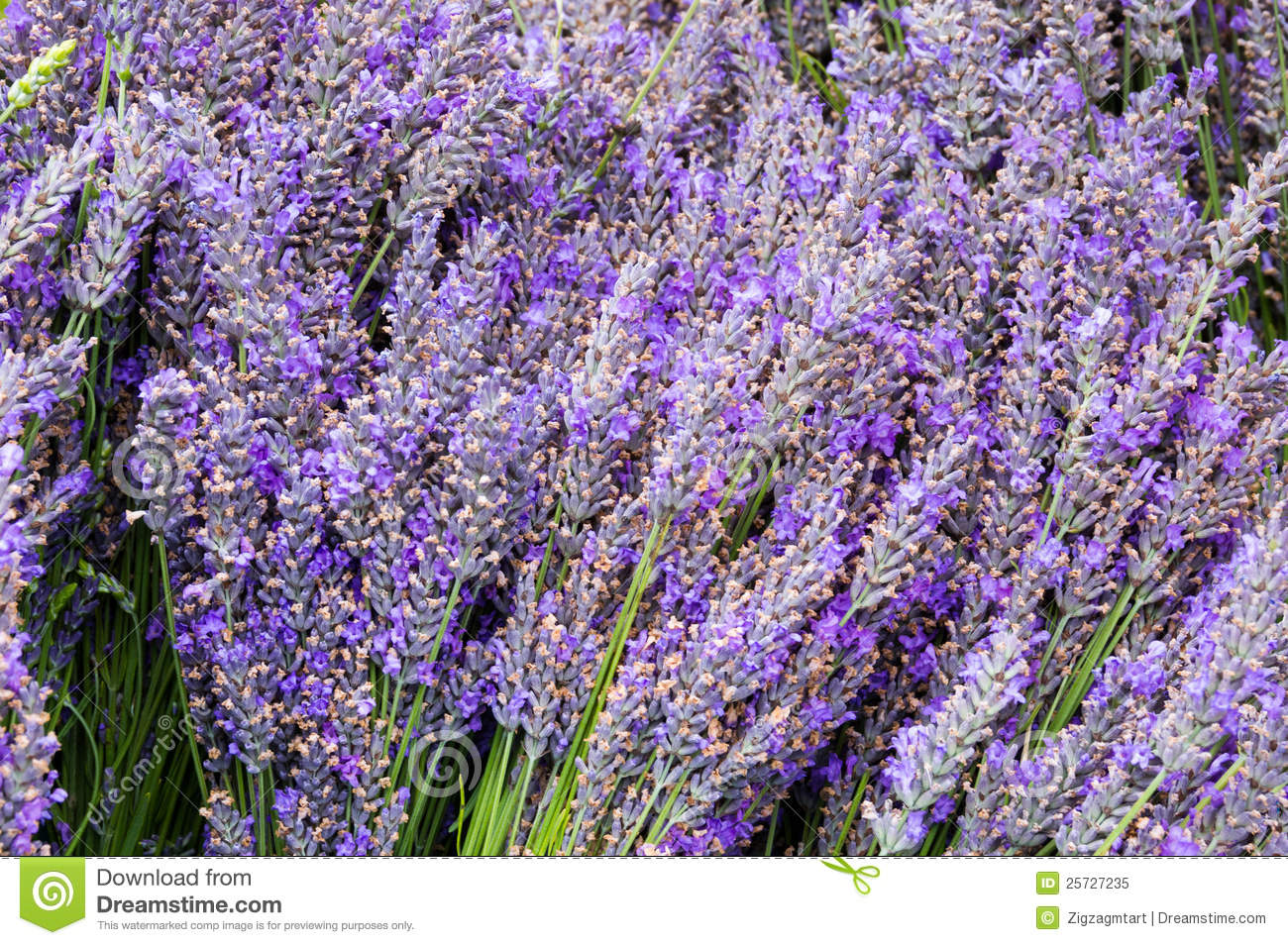 Lavendar flowers and stems in bunches