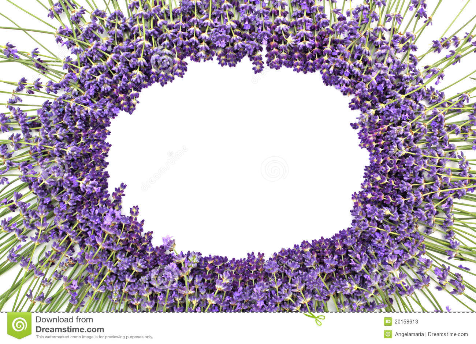 Lavendel stockbild. Bild von medizin, dekoration, frisch - 20158613