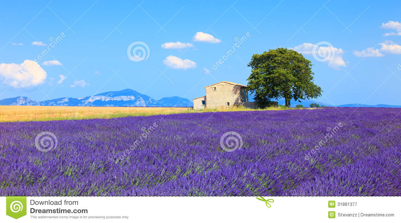 Lavendel blüht blühendes Feld, Haus und Baum. Provence, Franken
