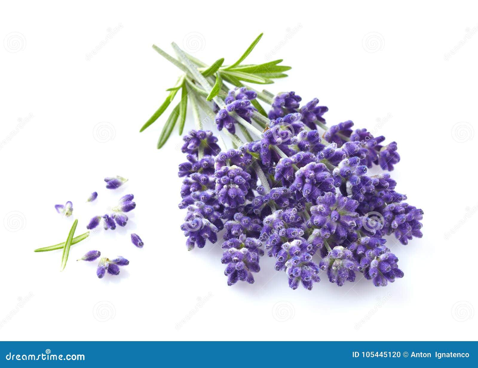 Lavendel blommar i closeup