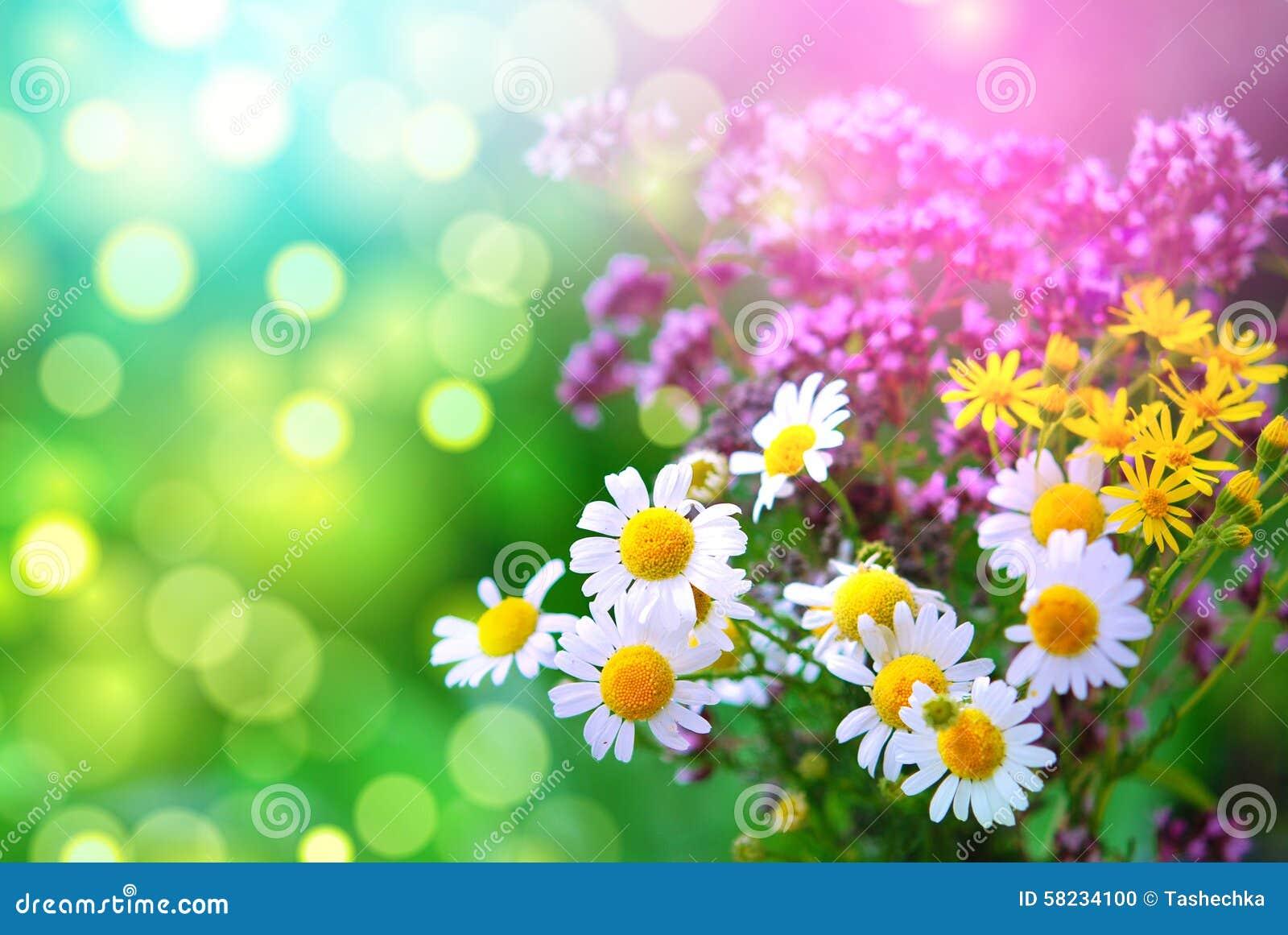 Lavendel en madeliefjes in een mooie de lentetuin