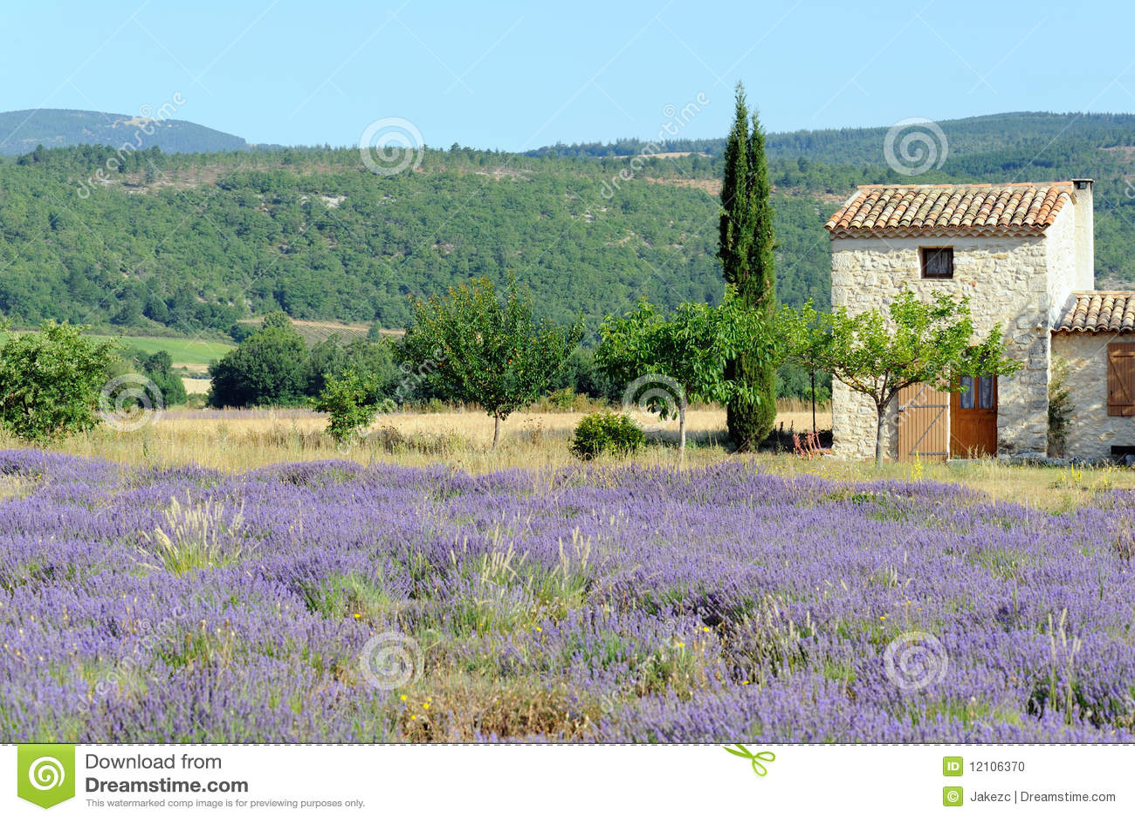 lavendel in provence frankreich stockfoto bild 12106370. Black Bedroom Furniture Sets. Home Design Ideas