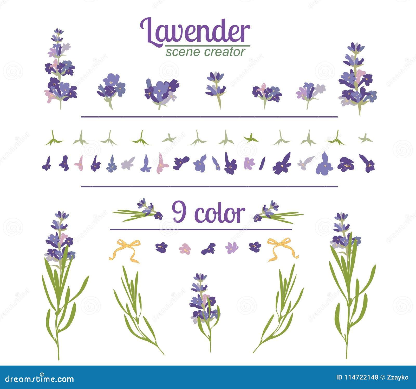 Lavendelblomma på vit bakgrund Färgrik tappningillustration