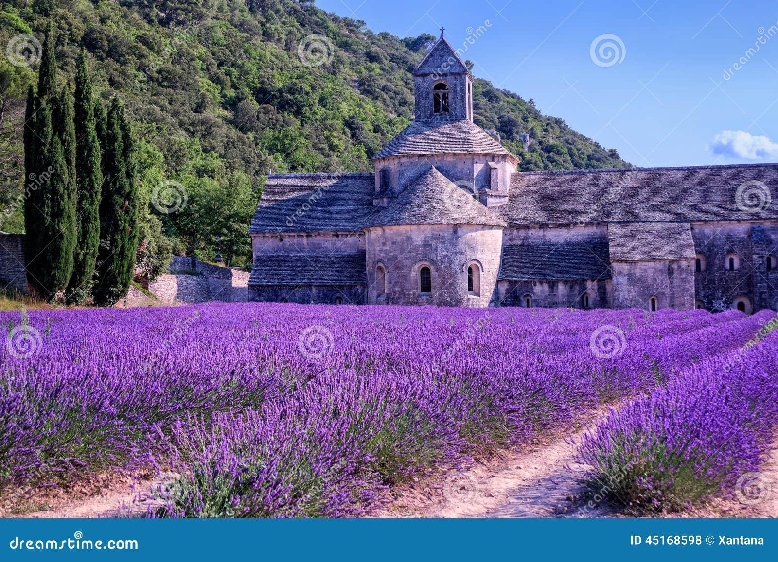 Lavendelfelder frankreich stockfoto bild von lavendel for Lavendelfelder provence