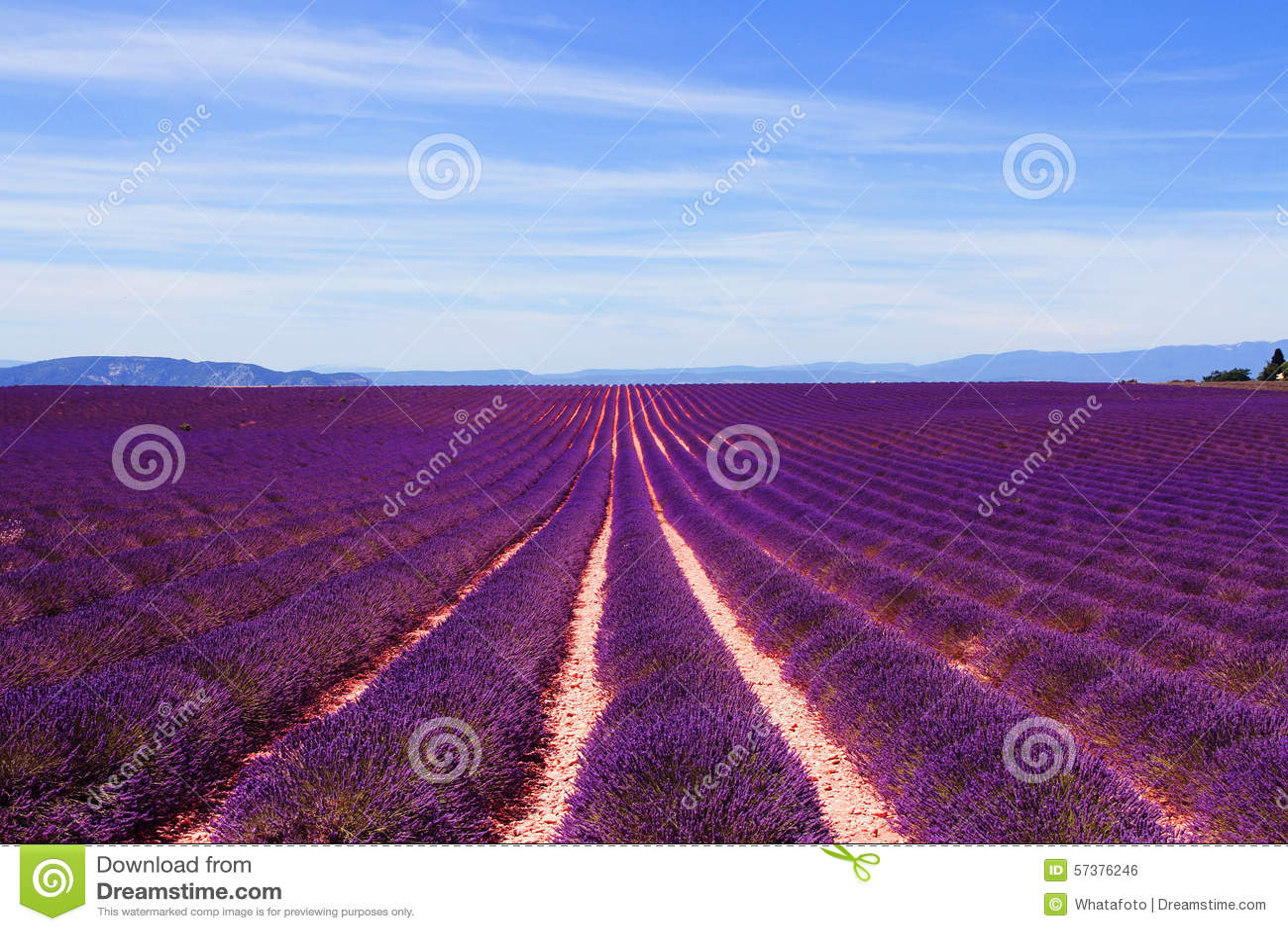 Lavendelgebied bij het plateau van Valensole in de Provence, Frankrijk