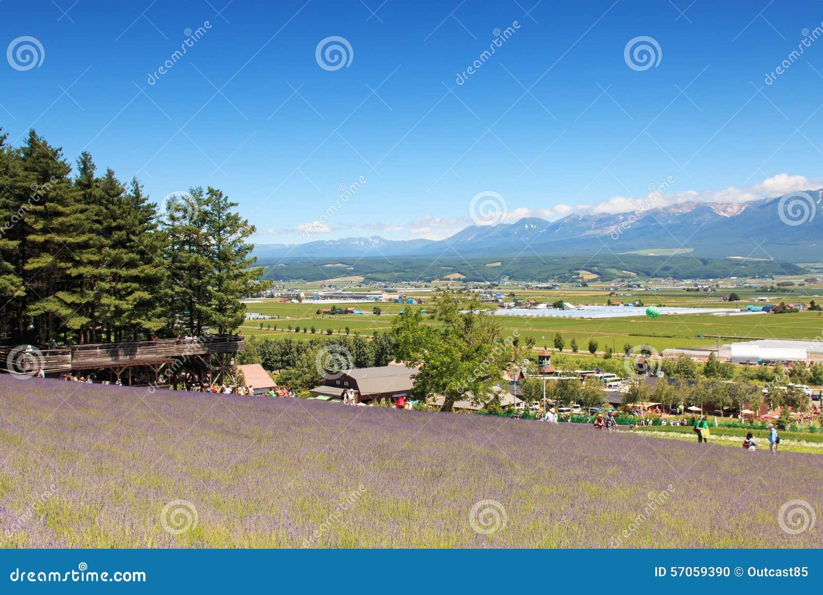 Lavendelgebied in Furano, Hokkaido met sommige toeristen die langs op de achtergrond lopen