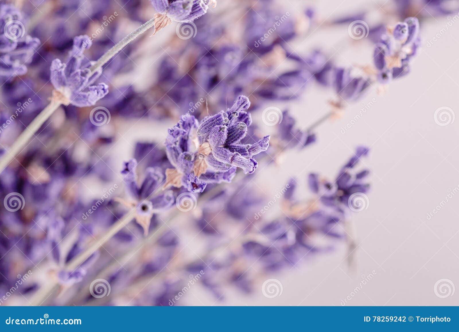 Lavender κινηματογραφήσεων σε πρώτο πλάνο λουλούδια