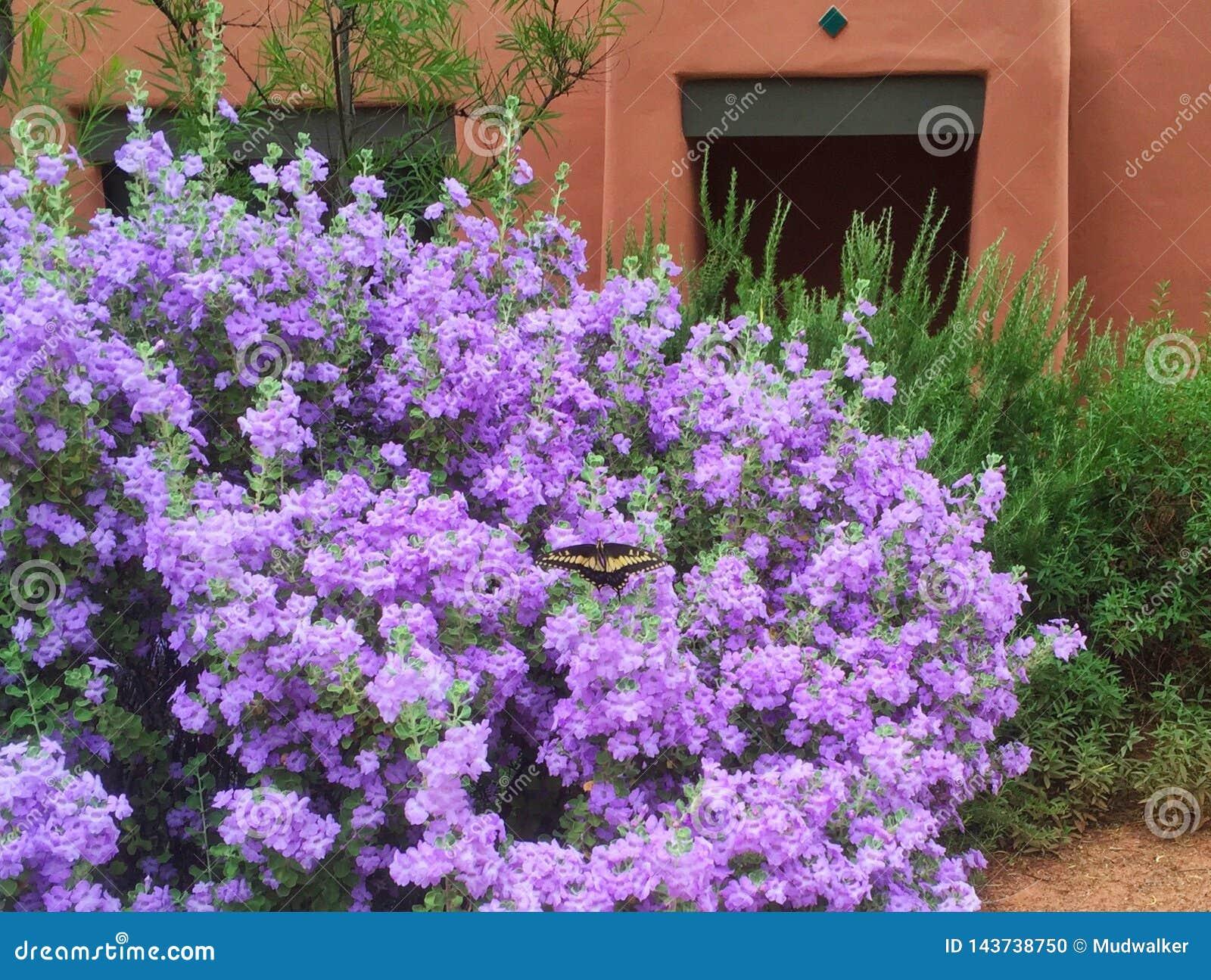 Lavender Μπους και πεταλούδα έξω από Enchantment Casita