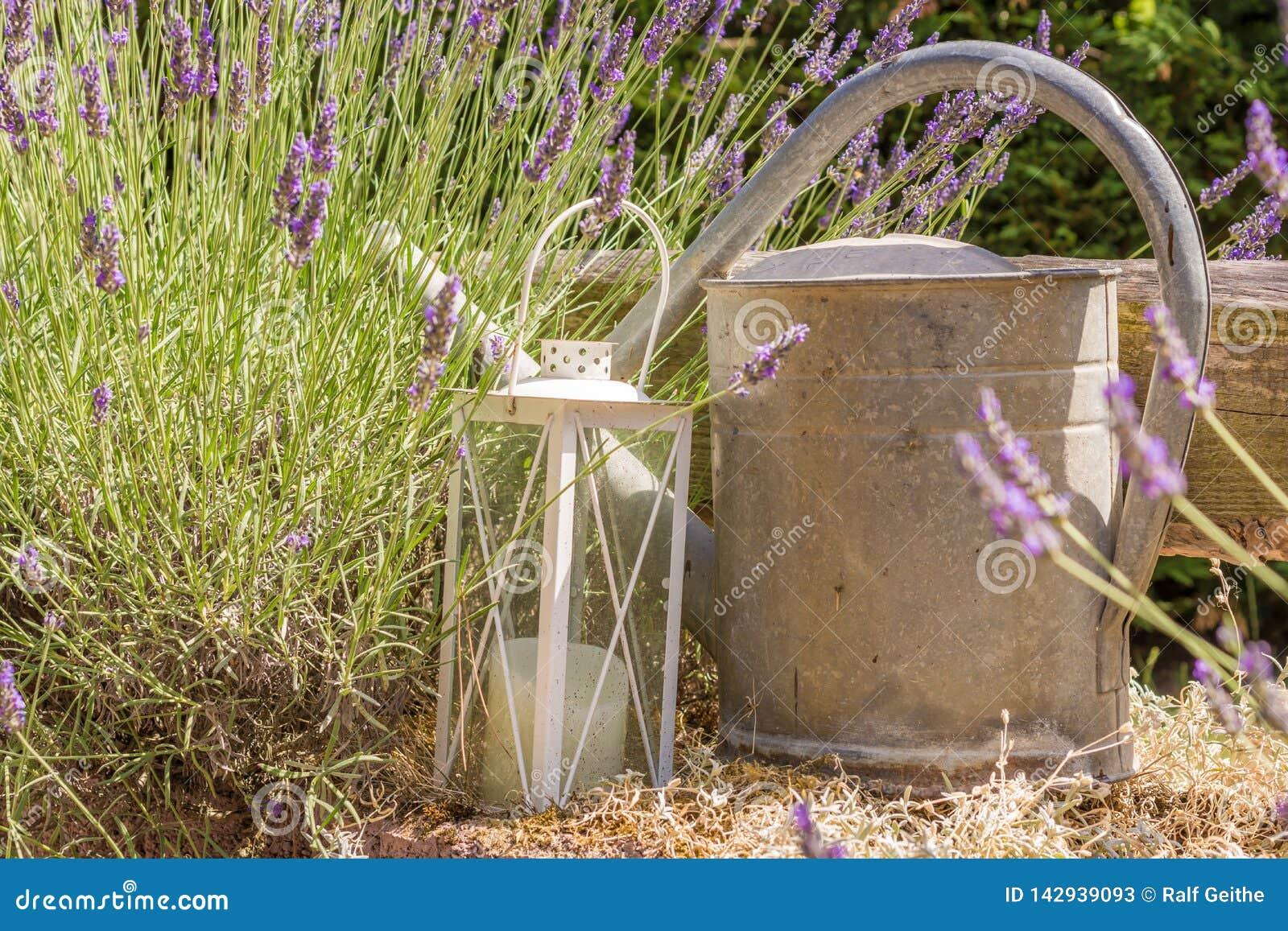 Lavender που διακοσμείται με το φανάρι και ένα παλαιό πότισμα μπορεί