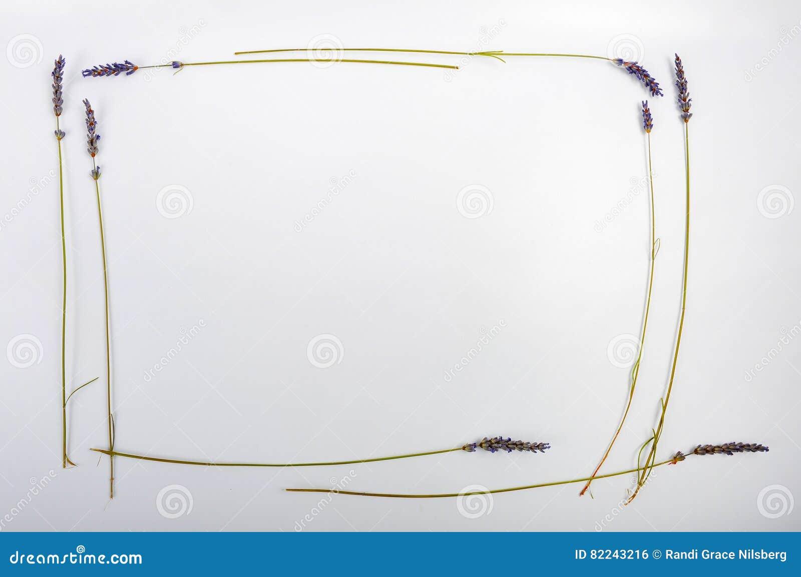 Lavender πλαίσιο