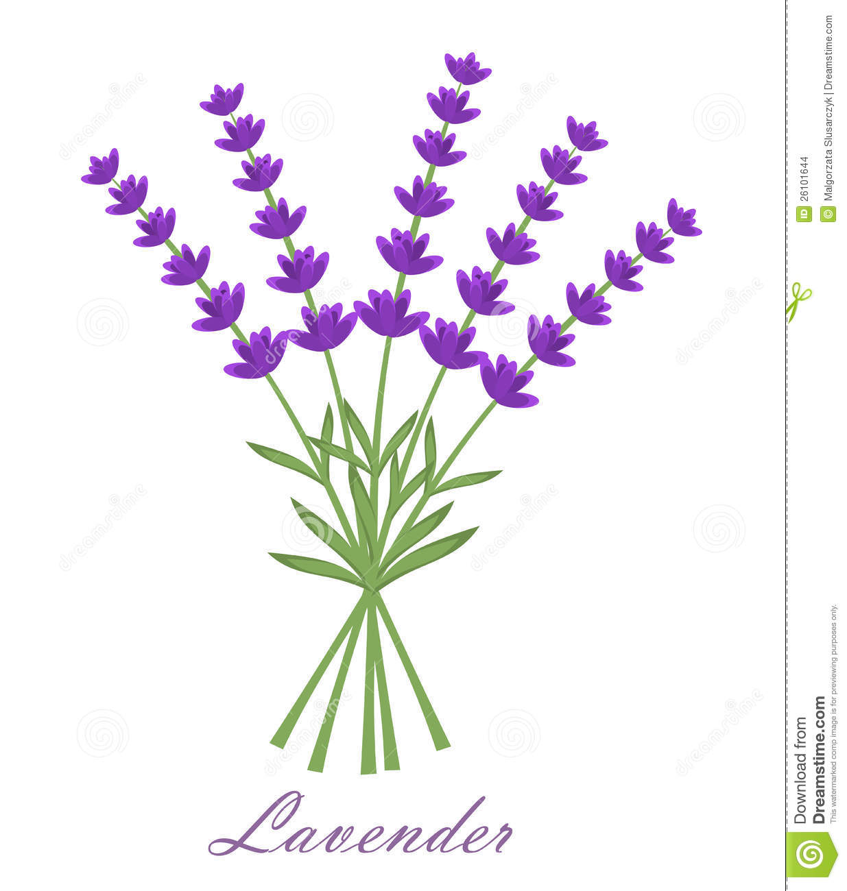 Lavender Stock Images Image 26101644