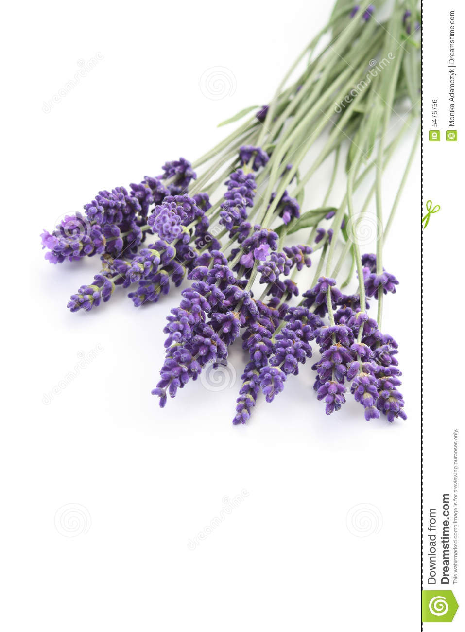 Lavender Royalty Free Stock Image Image 5476756