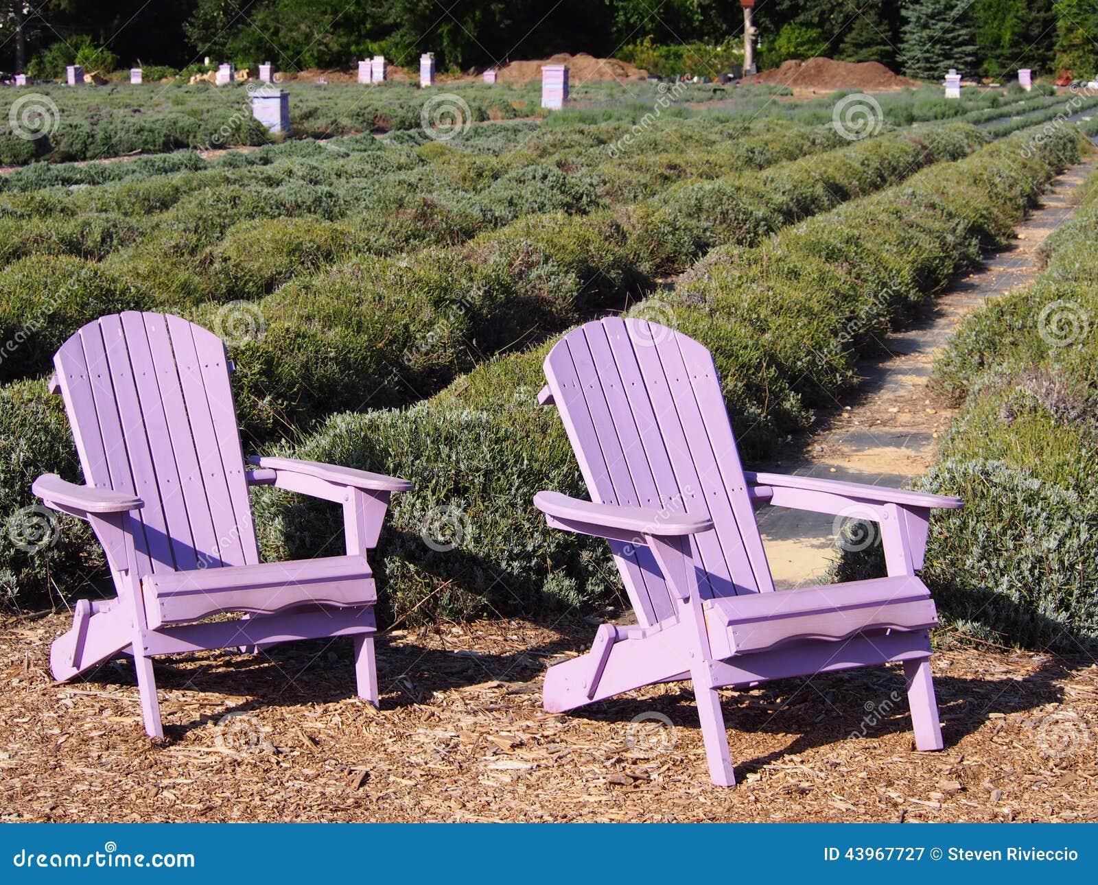 Lavender Adirondack Chairs In A Lavender Garden