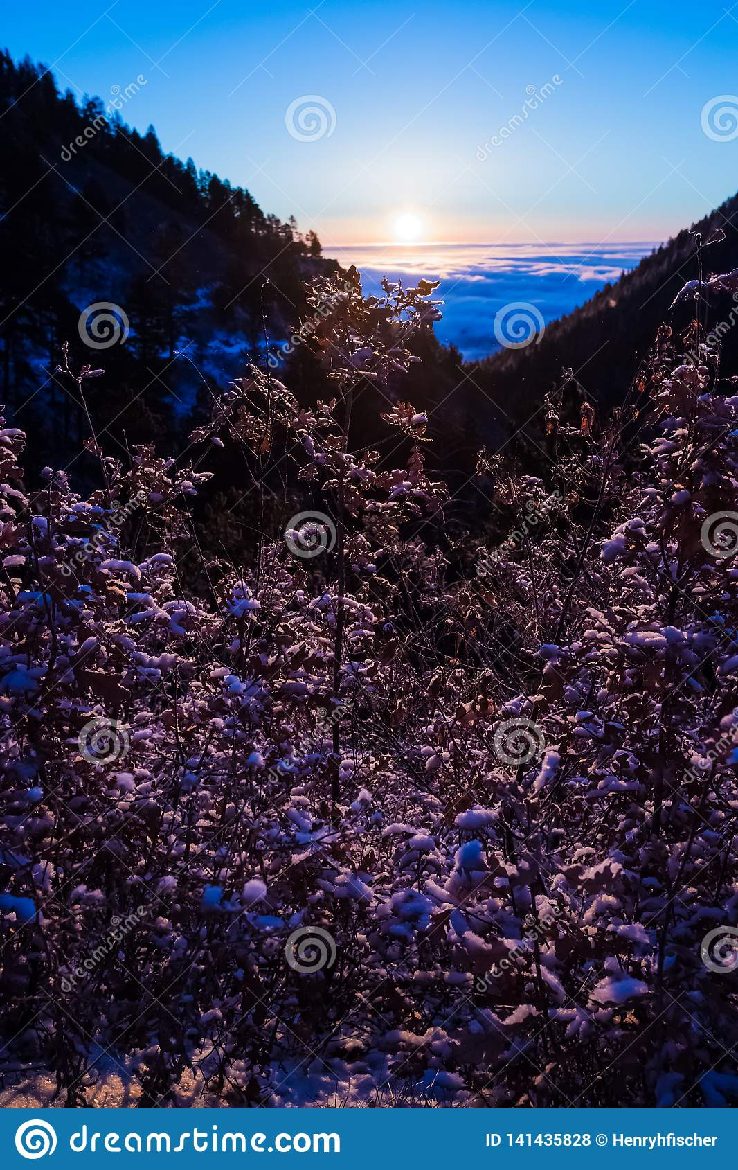 Lavender atop a Mountain at Sunrise