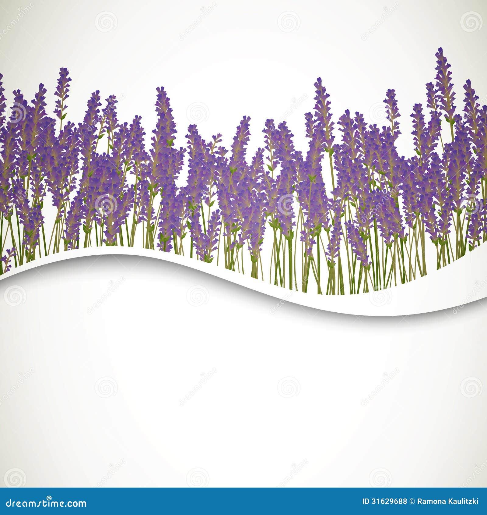 sex vidos lavendel spa