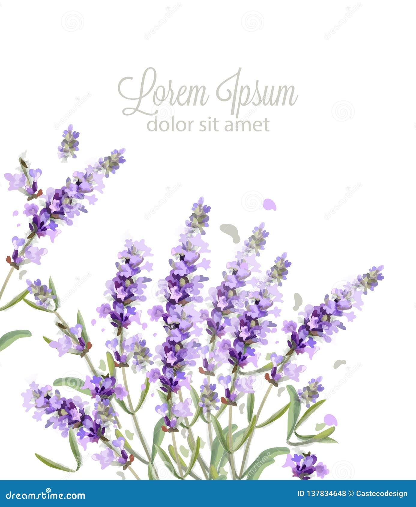 Lavender Card Watercolor Vector Flowers Bouquet Background