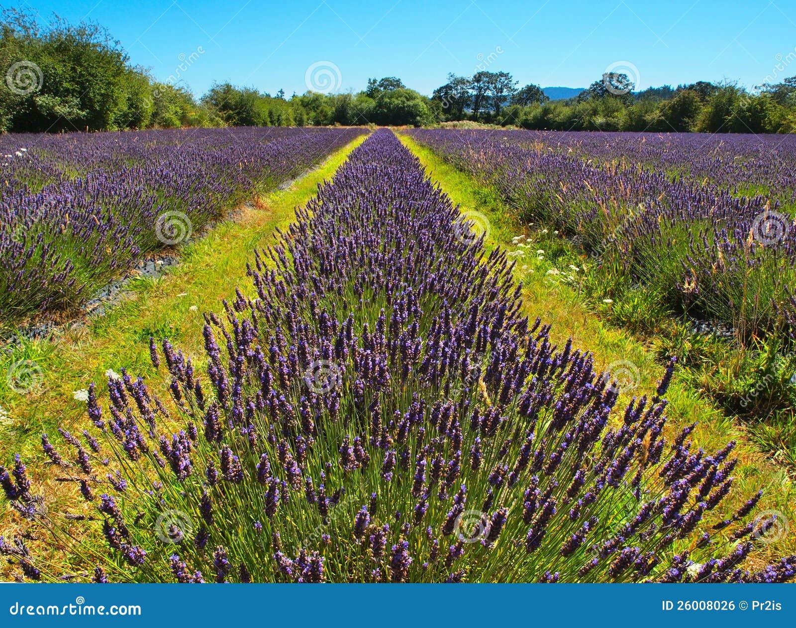 Lavender farming business plan