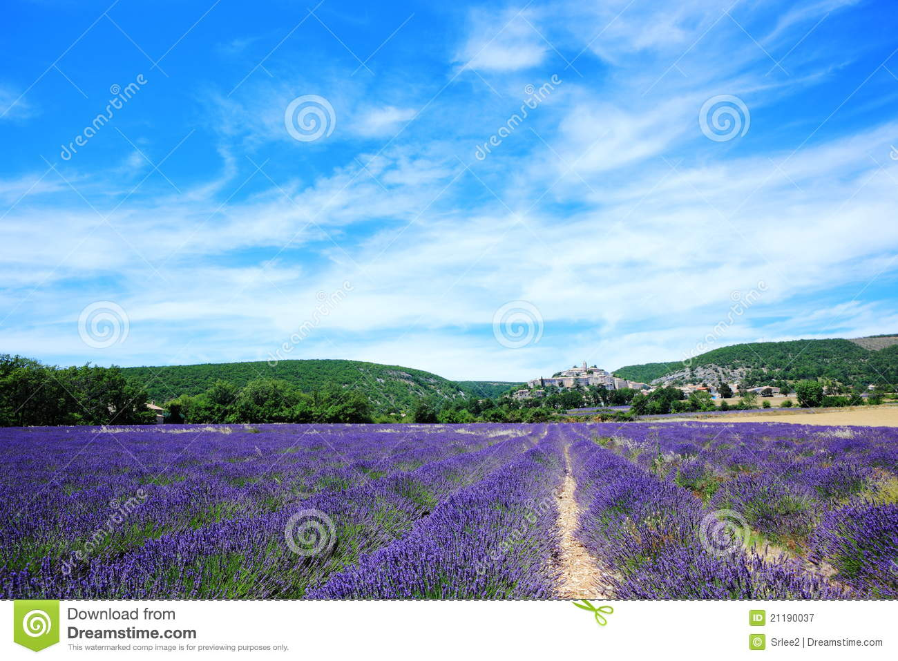 Lavender field at Banon, France