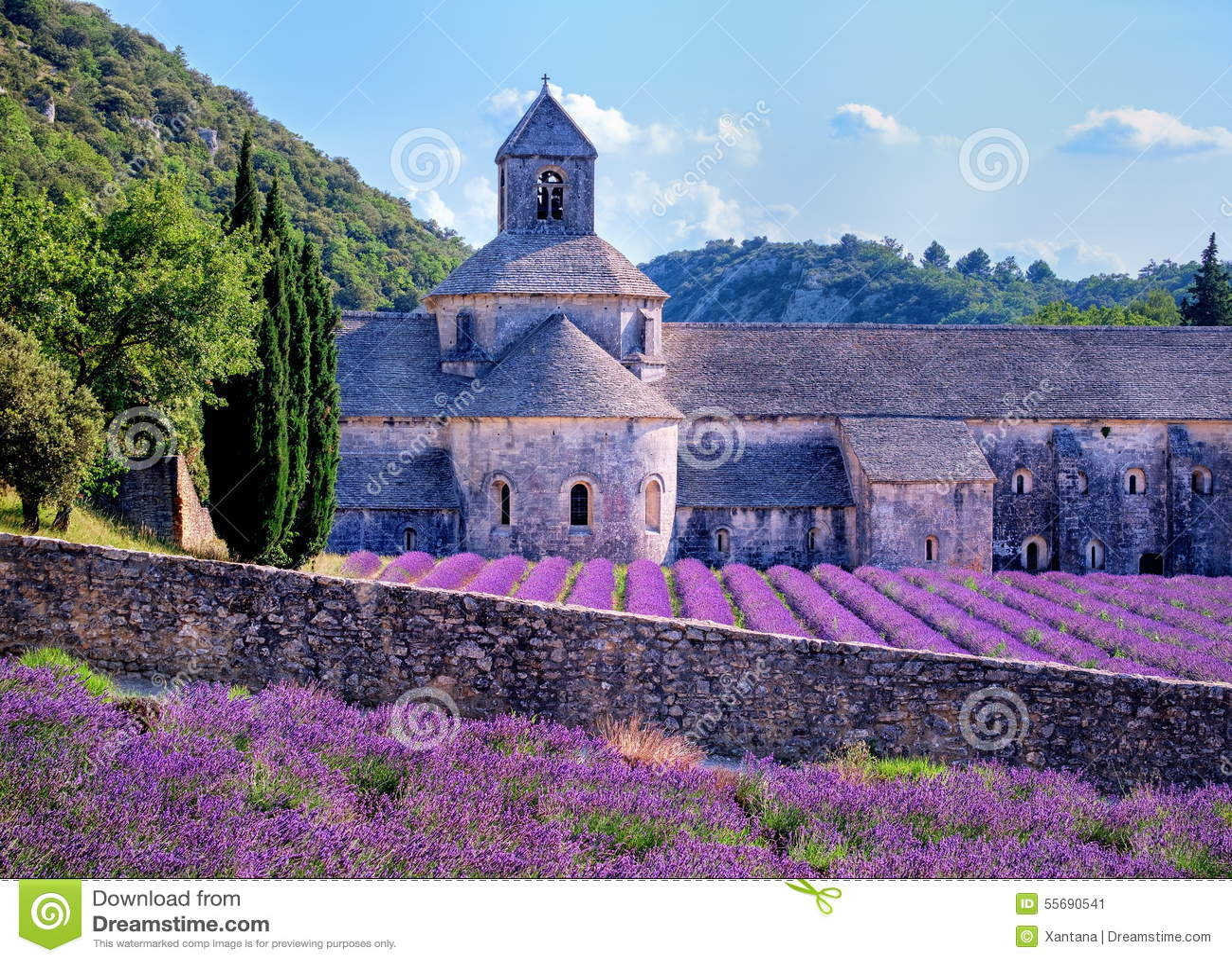 lavender fields provence france stock image image of nature provence 55690541. Black Bedroom Furniture Sets. Home Design Ideas