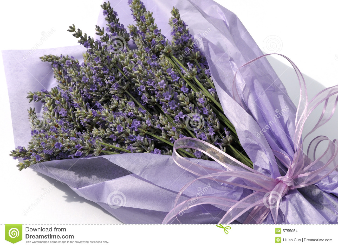 Lavender flower bouquet stock photo. Image of white, lavender - 5755054