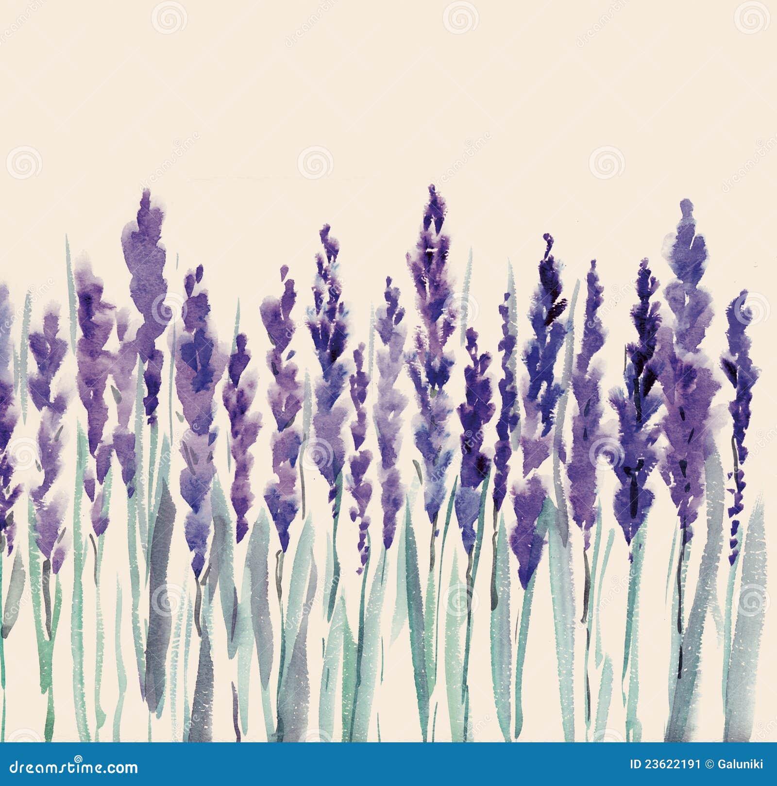 Lavender Flowers Stock Image - Image: 23622191
