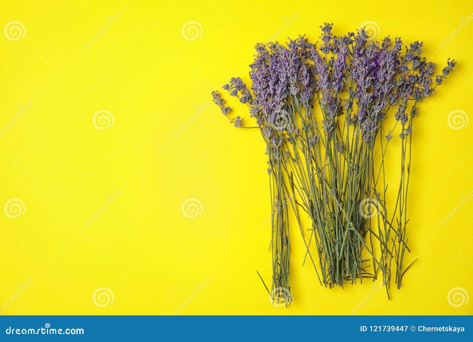 Lavender flowers on color background