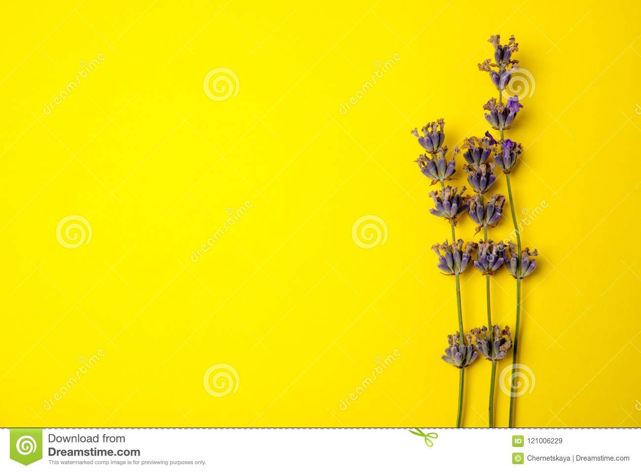 Lavender flowers on color background
