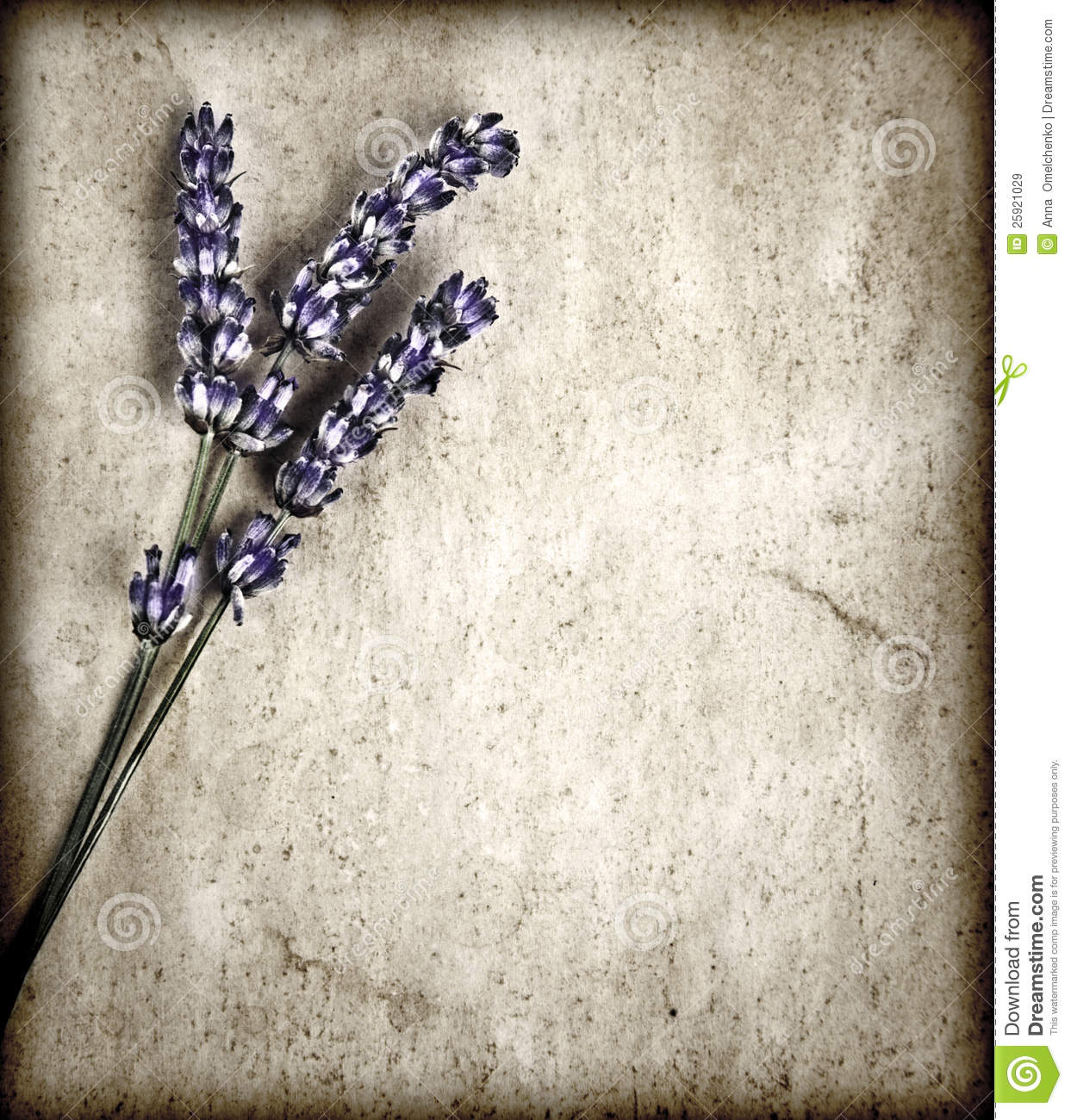 Lavender Flowers Gray Background Royalty Free Stock