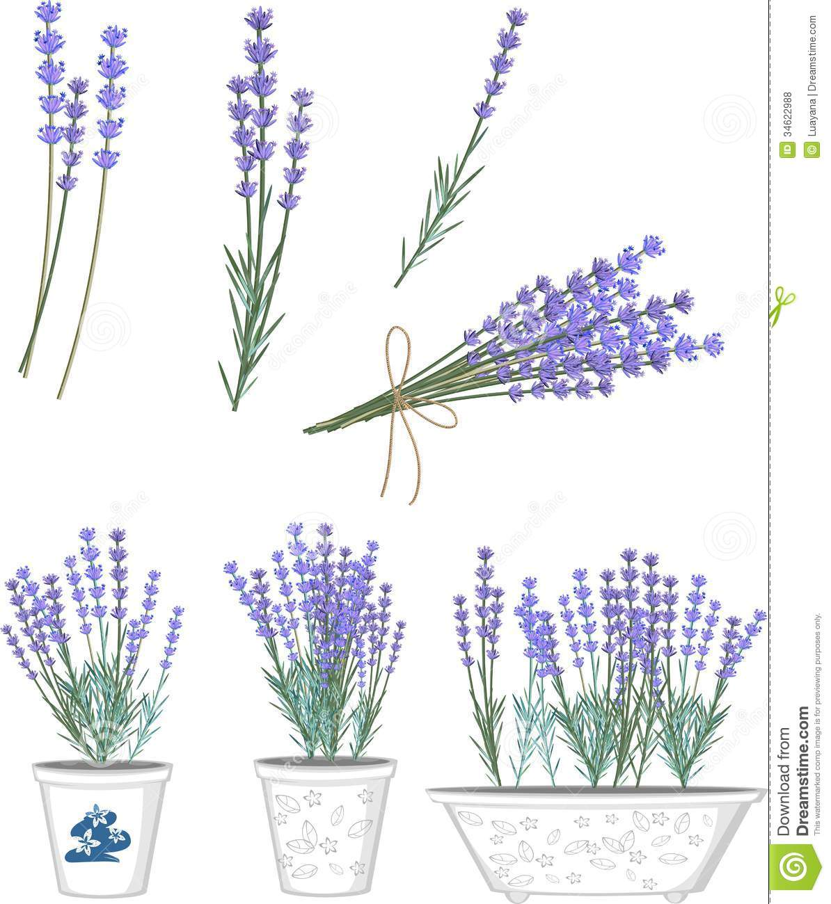 Lavender Flowers Royalty Free Stock Photos Image 34622988
