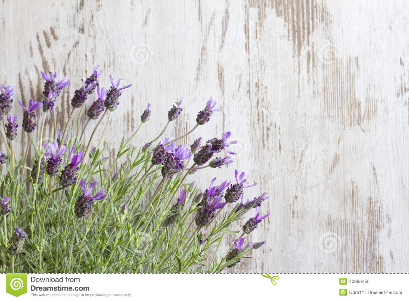 lavender vintage background - photo #9