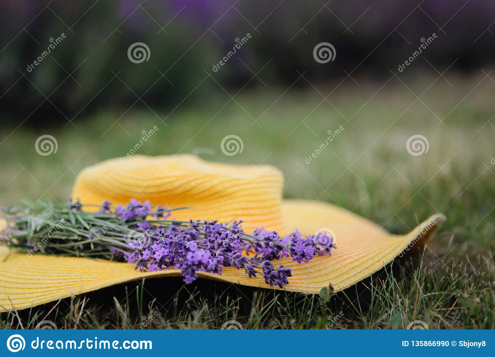 Lavender flowers on a yellow hat in summer in Hungary