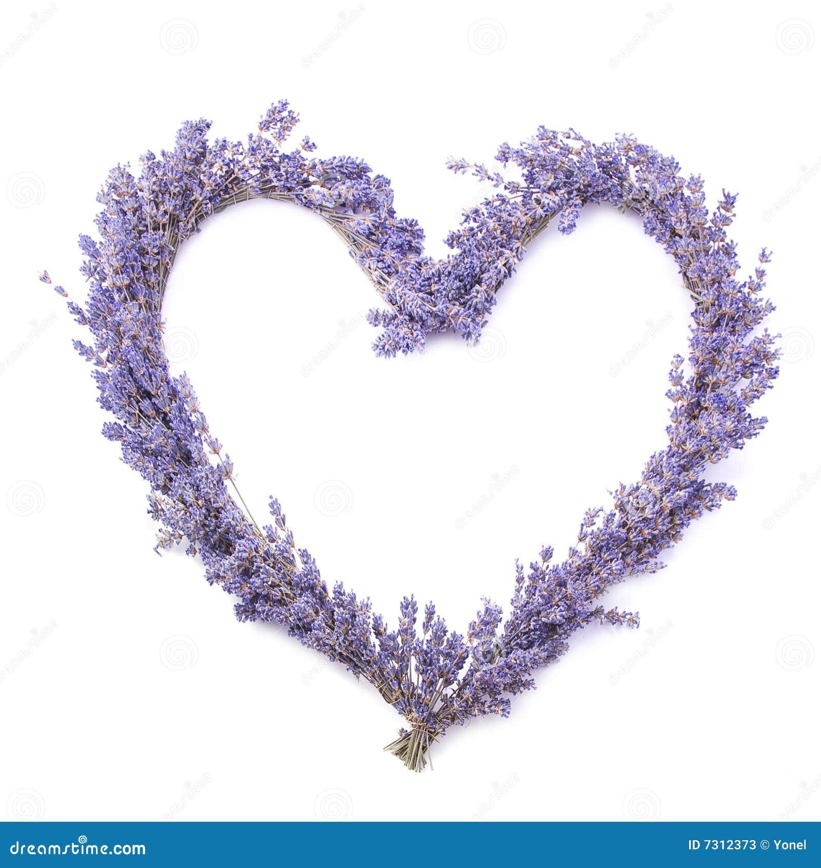 Lavender heart on white background (gift, valentine, etc.).