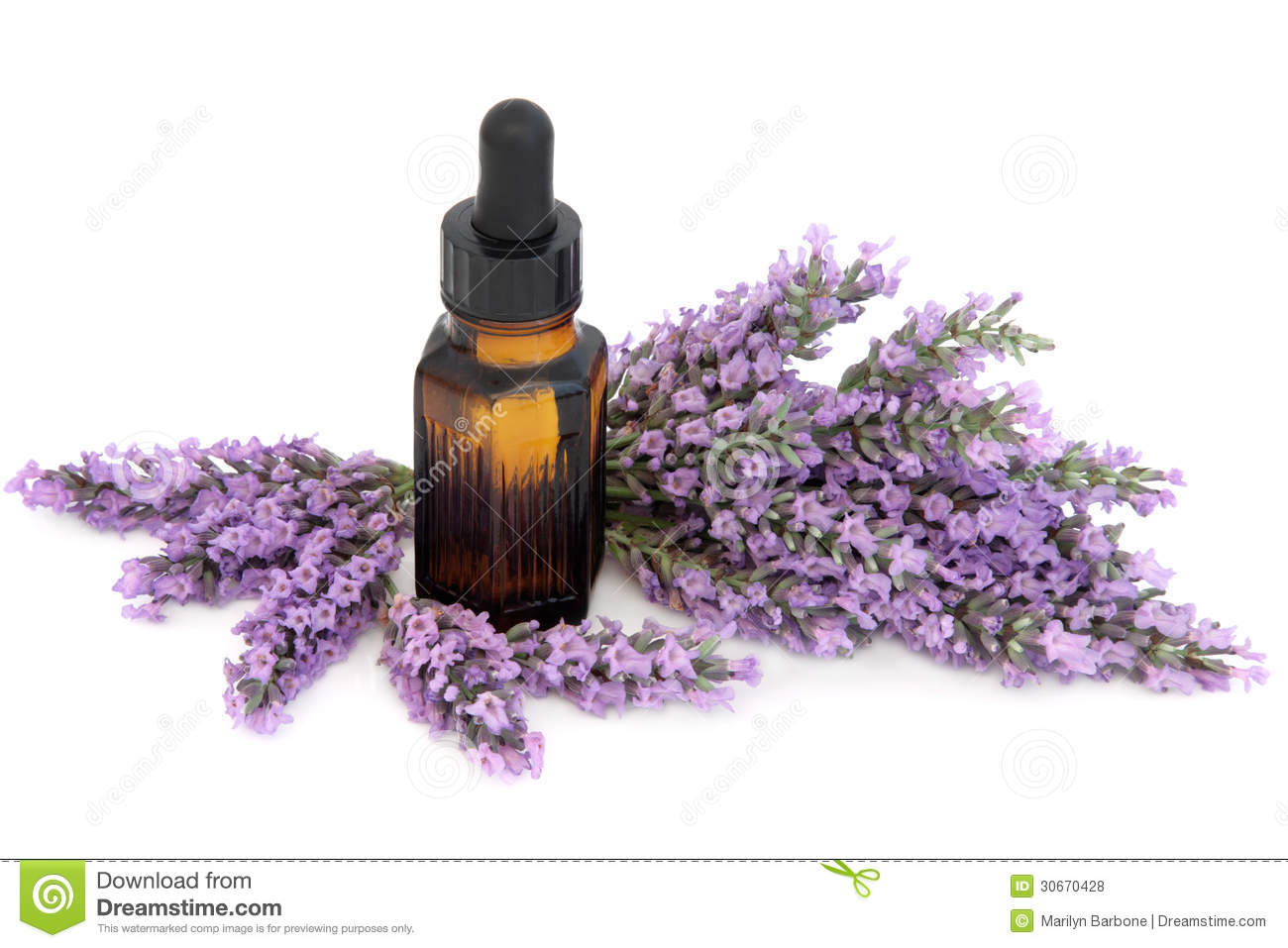 Lavender Herb Flowers Royalty Free Stock Photos Image