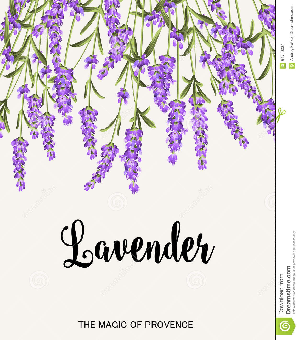 Lavender Sign Label Stock Vector Image Of Ornament
