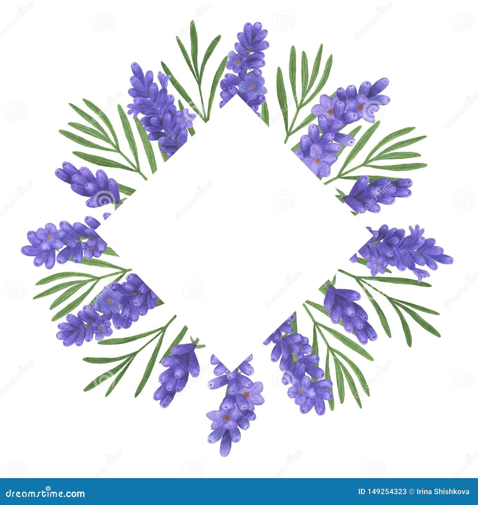 Lavender Watercolor Bouquet Of Provence Flowers Illustration