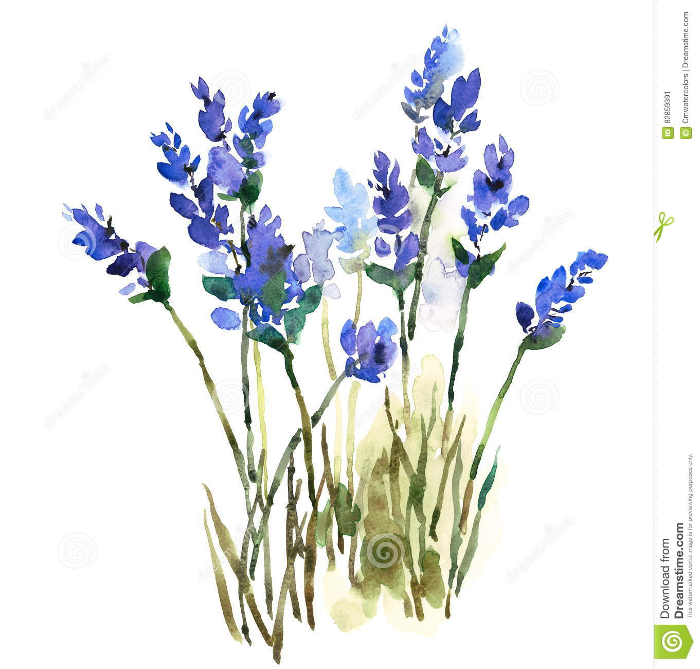 Lavender Watercolor Flowers Illustration Hand Painted ...