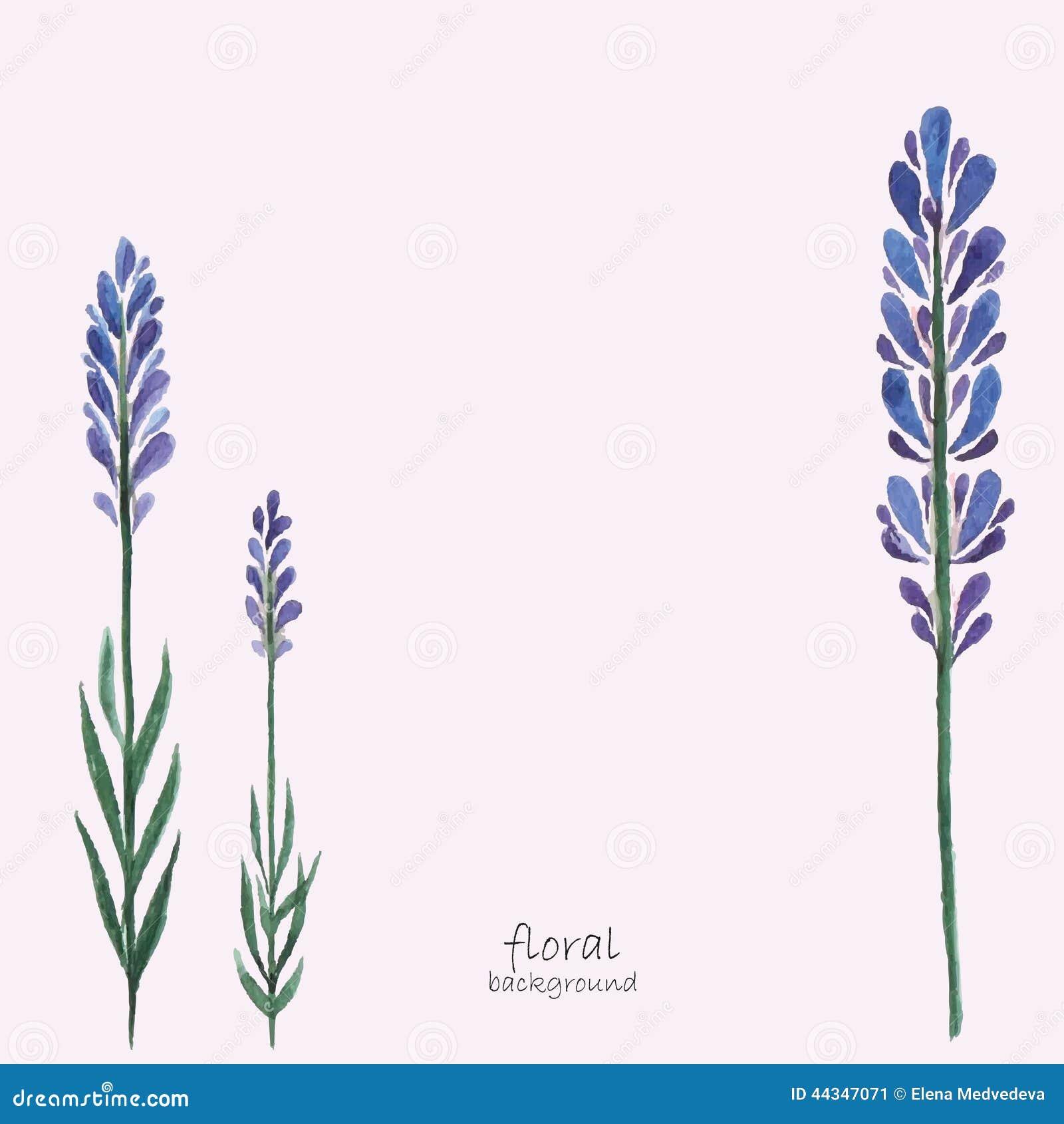 лаванда лаванда цветы цветы PNG изображение для